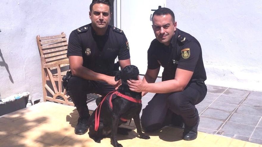 La Policía Nacional detiene a un hombre por intentar matar a su perro en Fuengirola