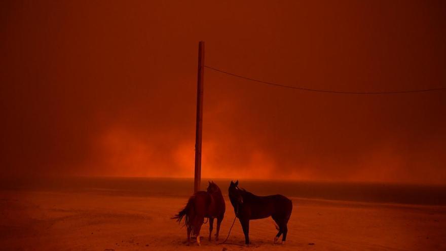 'Evacuated', segundo premio de la categoría 'Medio ambiente'. Unos caballos evacuados permanecen atados a un poste mientras el humo de un incendio forestal ondea sobre ellos en la playa de Zuma (Malibú), EEUU.