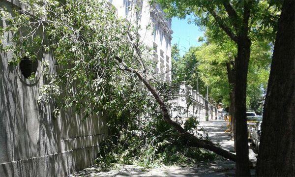 El árbol caído en la puerta lateral del Tribunal Supremo   Fotografía: @MAdelaCruzLeiva