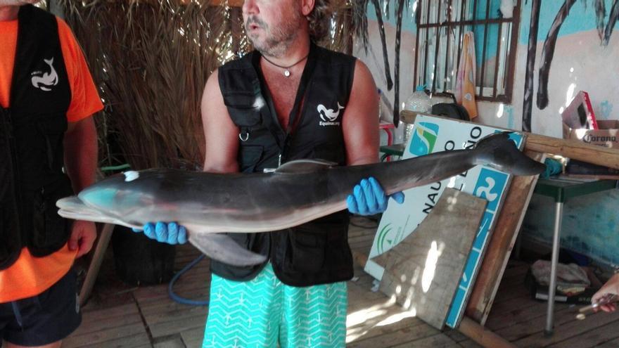 La cría de delfín que falleció por el acoso de los bañitas en Mojácar
