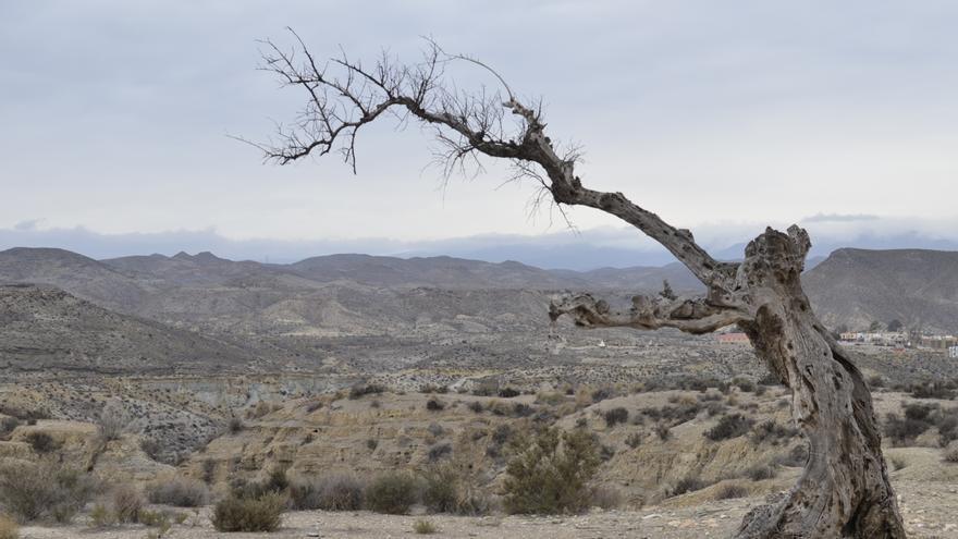Vista de la zona desértica de Tabernas (Almería).
