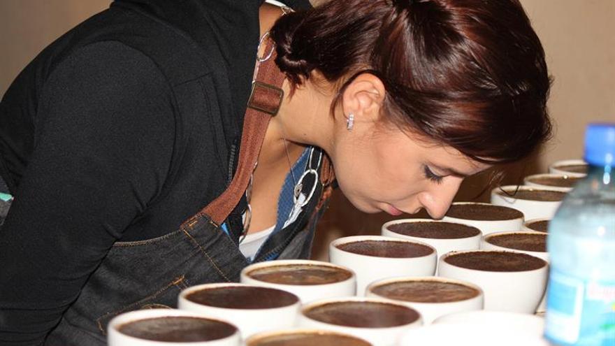 Cafés exóticos panameños compiten por un puesto en una cata internacional