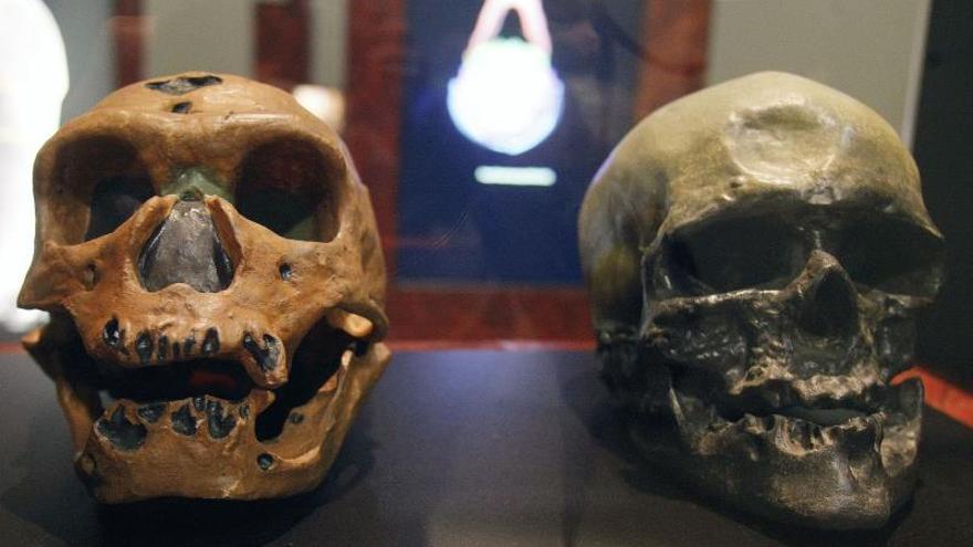 Los humanos actuales tienen lóbulos parietales mayores que los neandertales