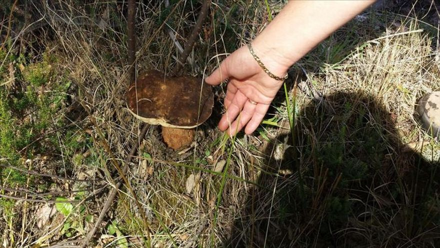 La recogida de setas, un negocio masivo que está arruinando los bosques