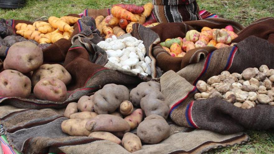 Una mutación natural y el cruce de diversas variedades creó la patata europea