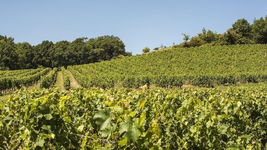 La Junta ingresa 13 millones a 1.368 agricultores por la reestructuración de su viñedo antes de que termine el año