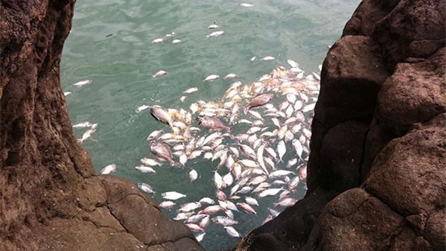 De los peces muertos en La restinga #3