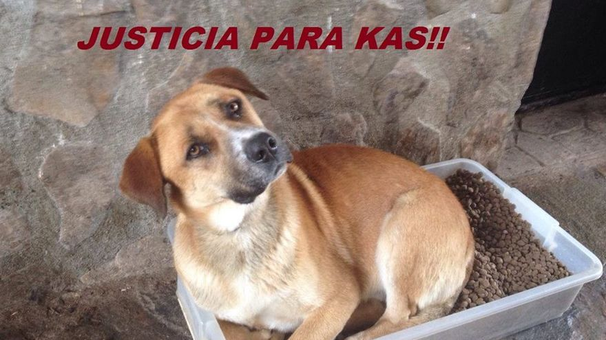 Perro asesinado por un cazador en Méntrida (Toledo) / Imagen: Dog Horse City