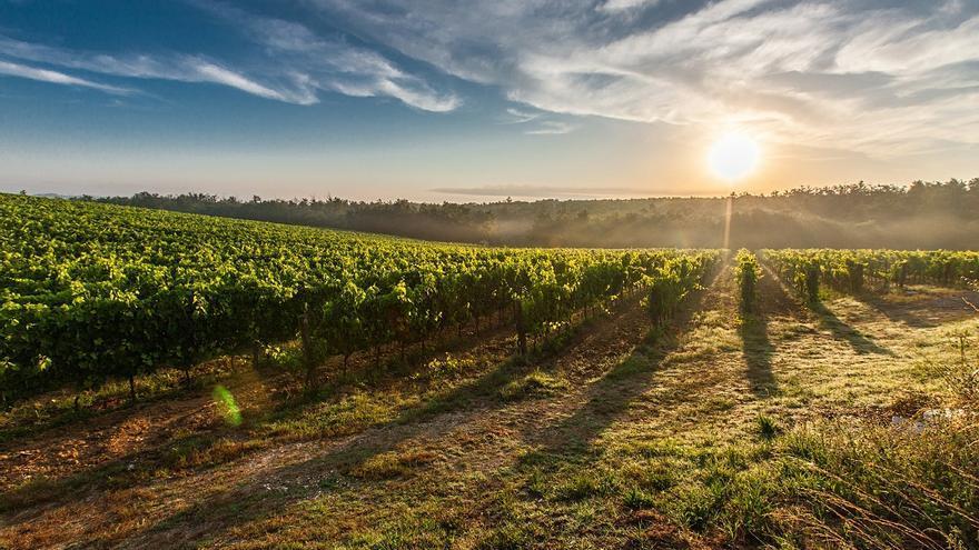 El viñedo, un motor económico y de lucha contra la despoblación