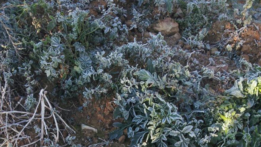 Buho encontrado muerto, Toledo 30/12/14 / Foto: Agentes Medioambientales de CLM