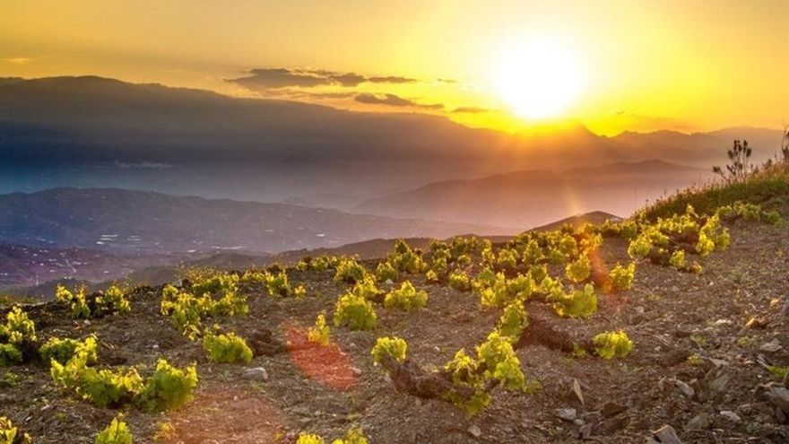 La sal y la uva pasa en España, dos cultivos únicos dispuestos a perdurar