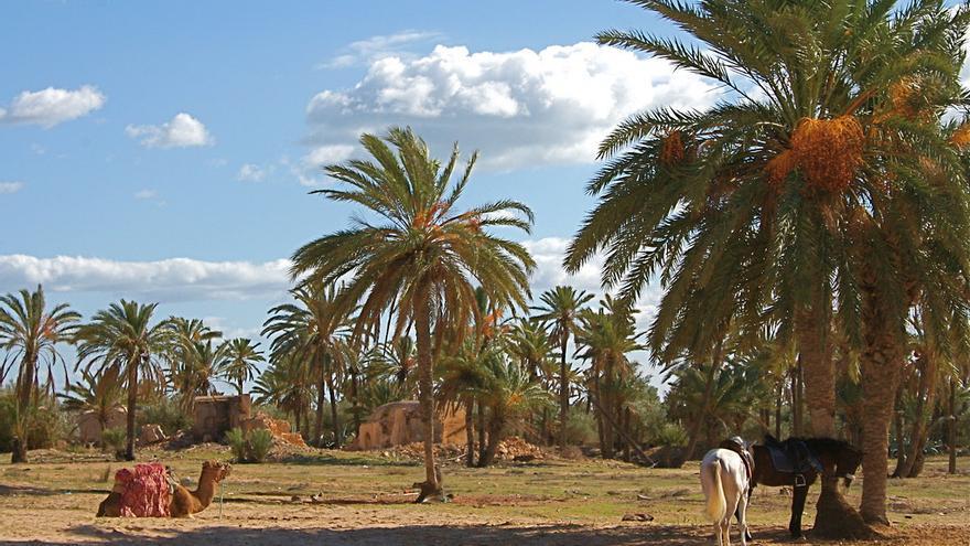 Palmerales dispersos en la isla de Djerba. Eric Demange