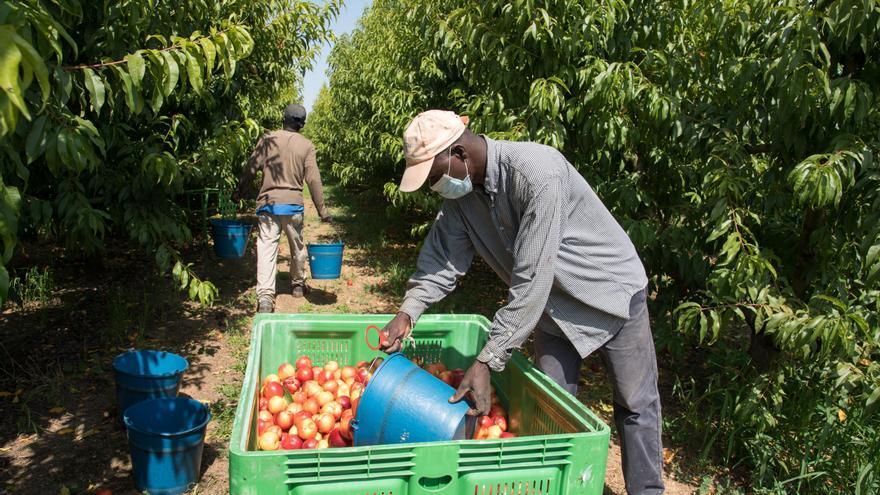 Almendralejo tendrá un control sobre la llegada y procedencia de temporeros para las campañas agrícolas