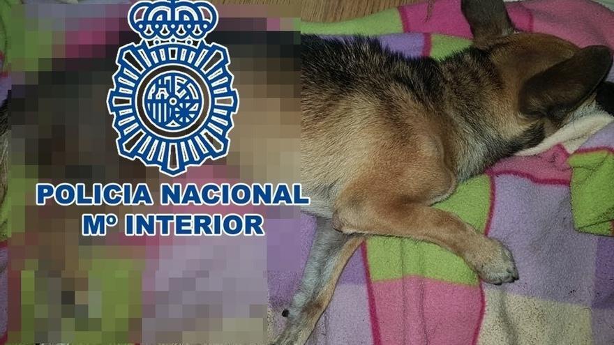 Imagen facilitada por la Policía Nacional de uno de los canes