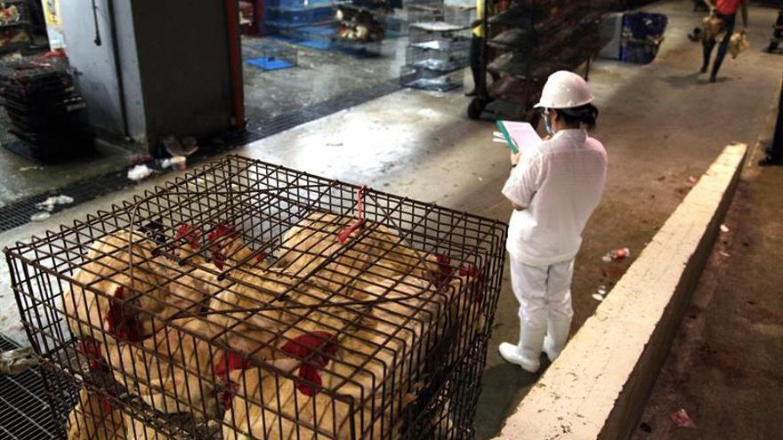 Taiwán sacrifica cerca de 32.500 pollos para detener un brote de gripe aviar