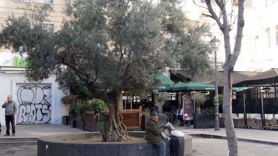 A la fresca de un olivo | SOMOSMALASANA.COM