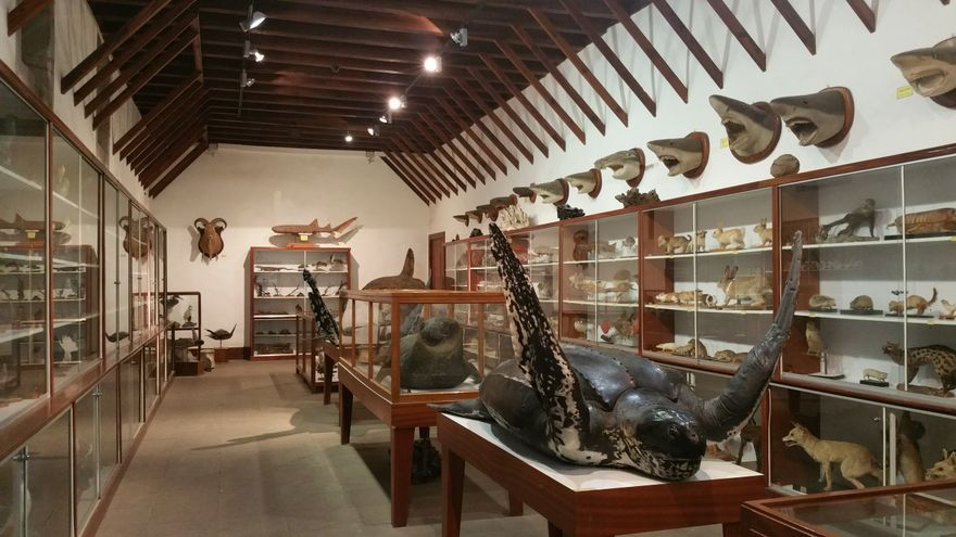 Sala dedicada a las Ciencias Naturales en el Museo Insular de San Francisco.