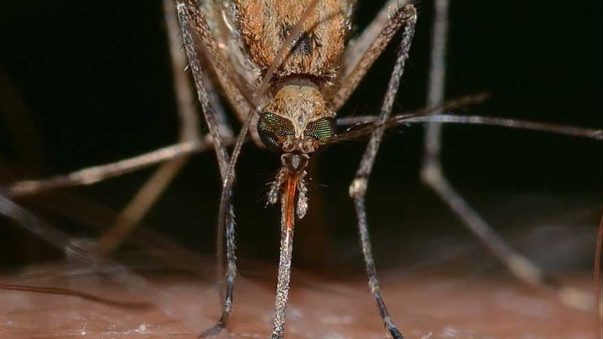 Nueve trucos para que no te piquen los mosquitos