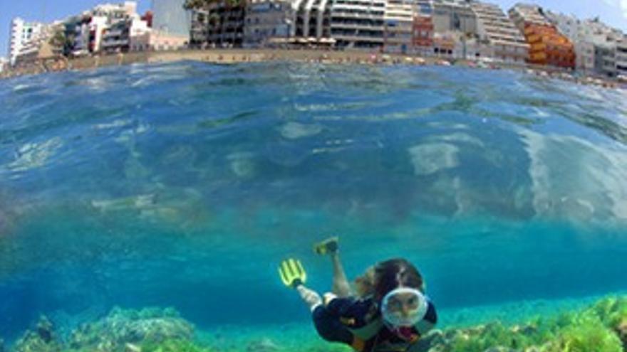Imagen submarina en Las Canteras (www.lpafotosub.com).
