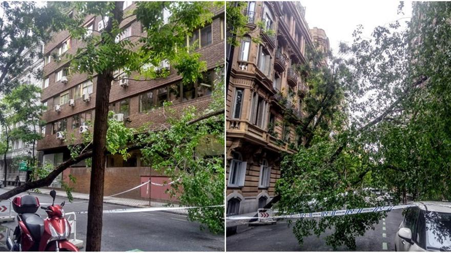 Imágenes del árbol caído en Zurbano | SOMOS CHAMBERÍ