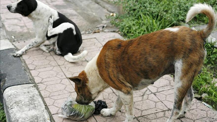 Marruecos elimina 150 perros callejeros tras el brote de rabia en Melilla