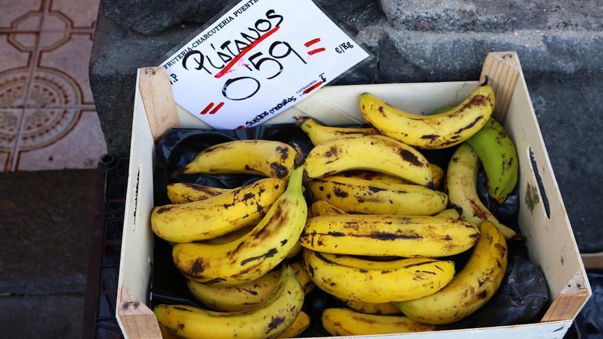 Plátanos de Canarias. (Alejandro Ramos)