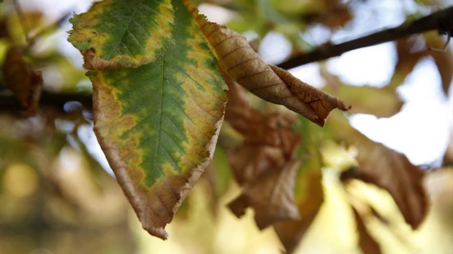 El otoño será más cálido después del tercer verano más caluroso en 51 años