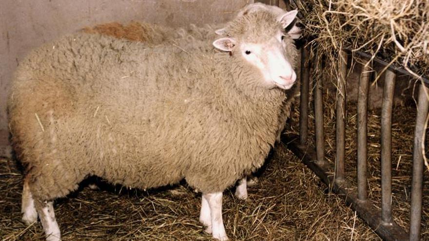 Se cumplen 20 años de la clonación de la oveja Dolly, un hito de la genética