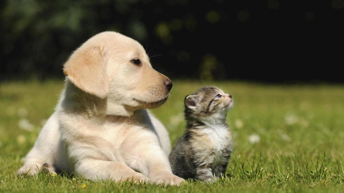 Gatos y perros.