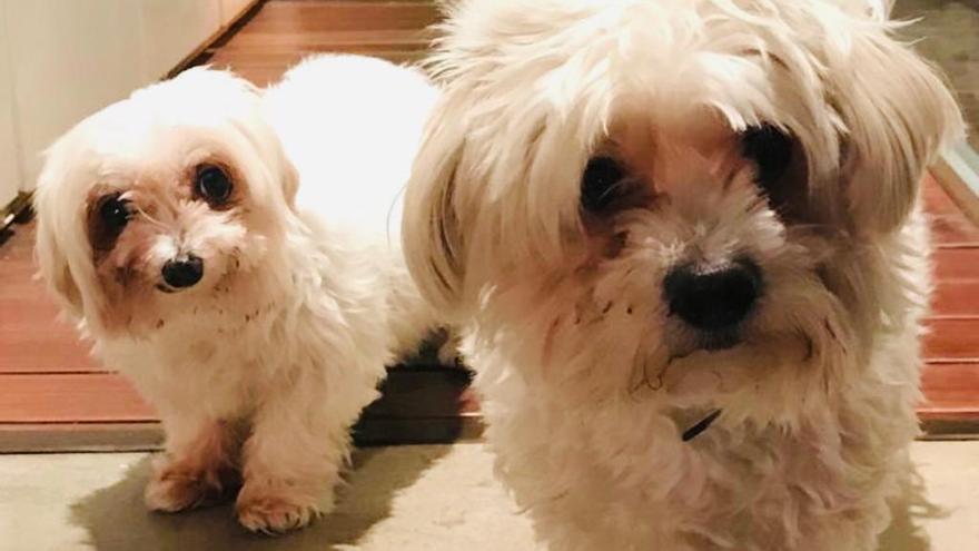 Lily y Lucas en su hogar