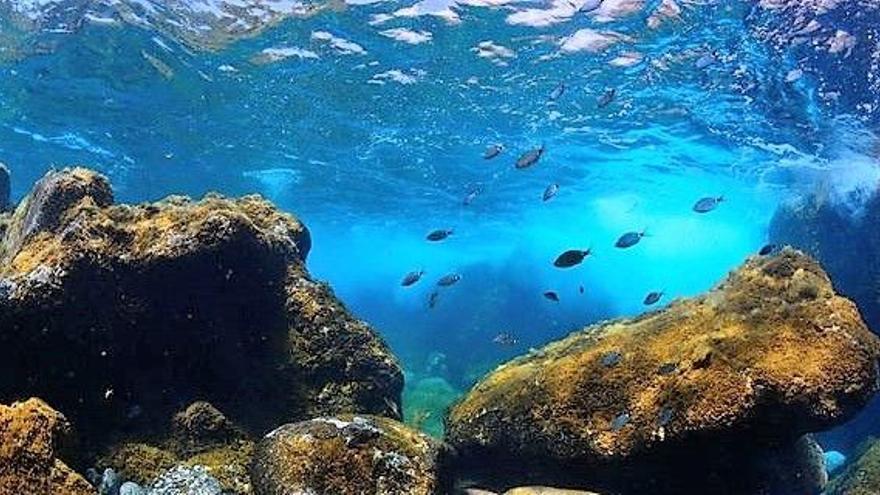 Pescadores herreños celebran un cuarto de siglo de la Reserva Marina