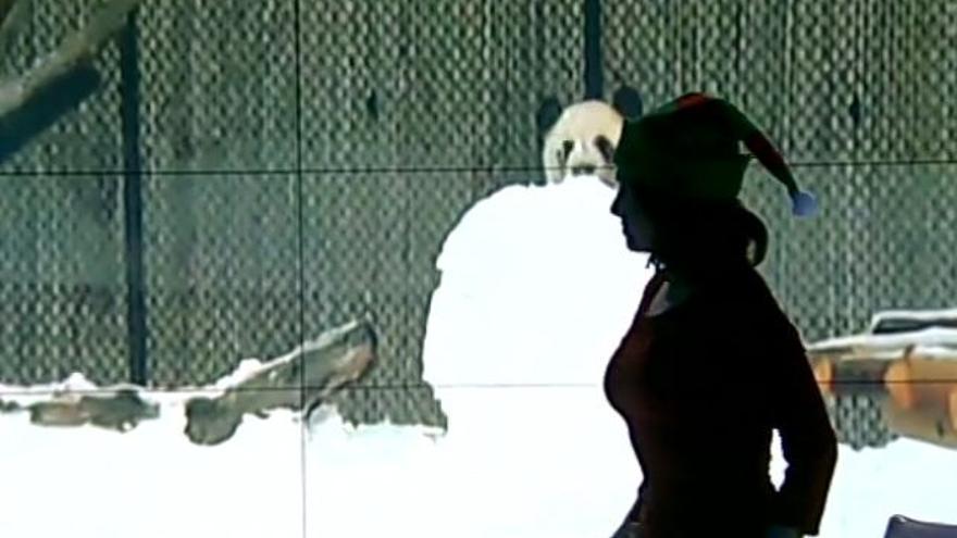 Mara Torres despide el año con un gorro de duende en La 2 Noticias