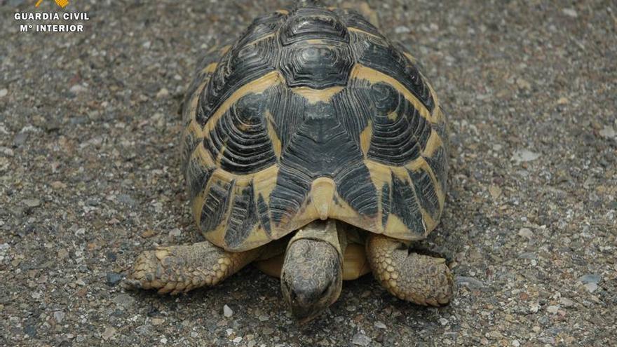 La tortuga fue intervenida y entregada en el Centro de Protección de Fauna Silvestre de la Alfranca (Zaragoza)
