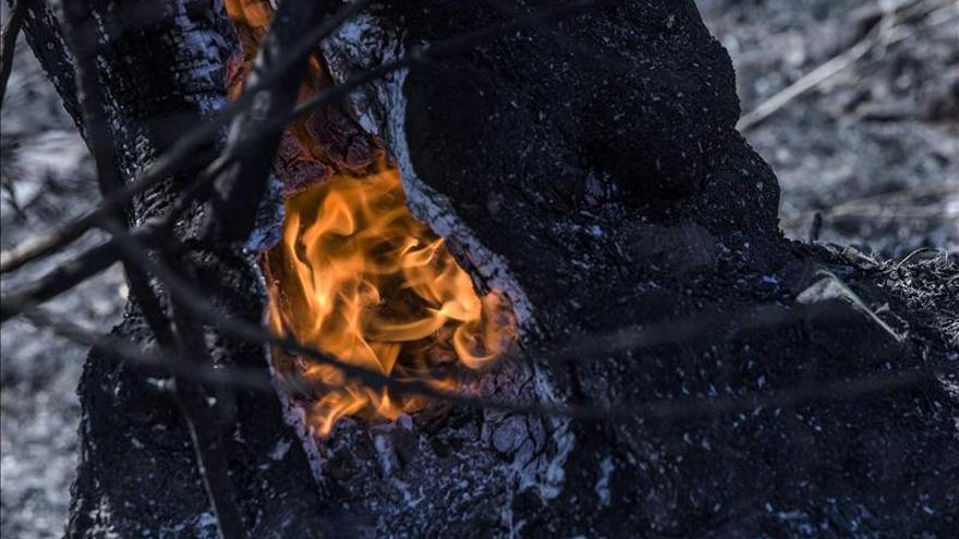 El Infoca trabaja en la extinción de un incendio en Casares