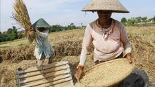 La huella que deja el arroz que comes: del agua al efecto invernadero