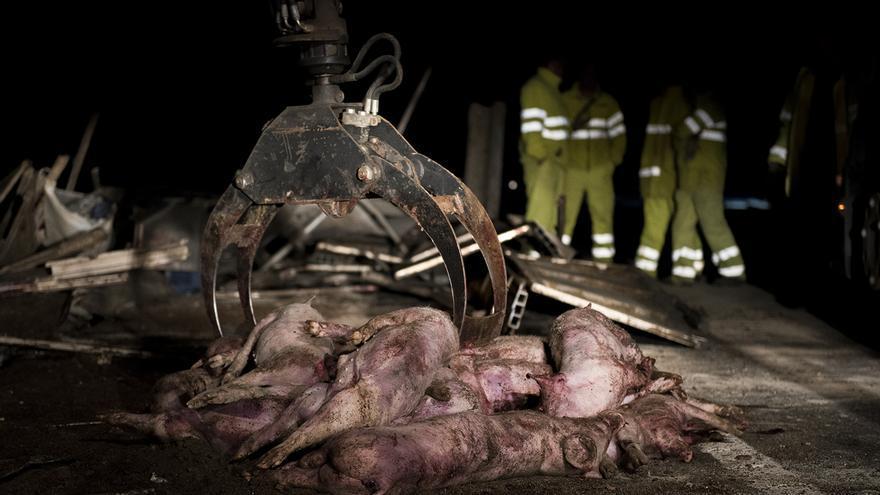 Víctimas del accidente de tráfico en Cenicero (La Rioja). Foto: ©Tras los Muros