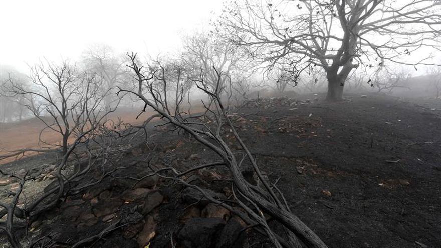 Se reaviva un foco del incendio de Canarias, tras haberse estabilizado anoche