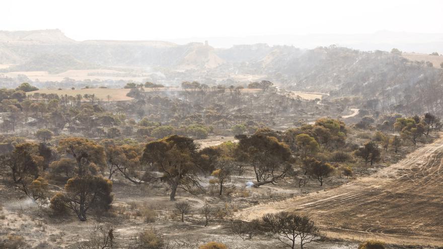 Un amplio retén de bomberos mantiene la vigilancia en la zona del Vedado de Eguaras afectada por el incendio.