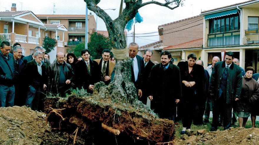 Plantación de un olivo centenario en la Plaza mayor de Marchamalo, símbolo de la localidad campiñera FOTO: Ayuntamiento de Marchamalo