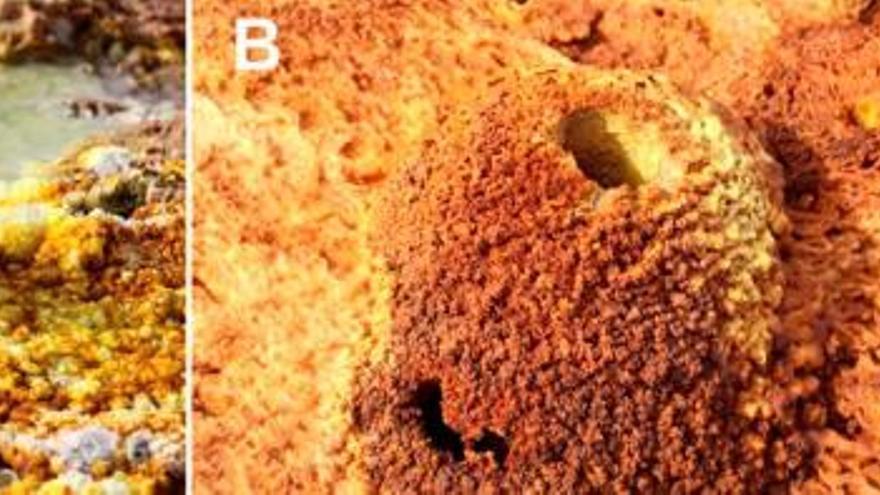 Hallan microorganismos que sobreviven en la región más calurosa del planeta