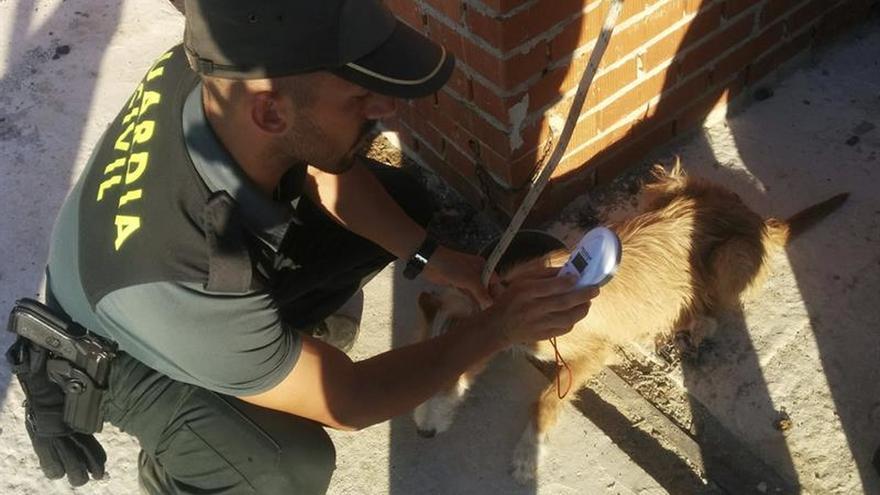 Detenido por maltratar y abandonar 19 perros, de los que 2 murieron de hambre