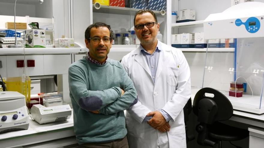 Investigadores detectan en España una cepa que apenas afectó a otros países
