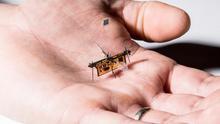RoboFly es un insecto robótico volador que se desplaza sin cables