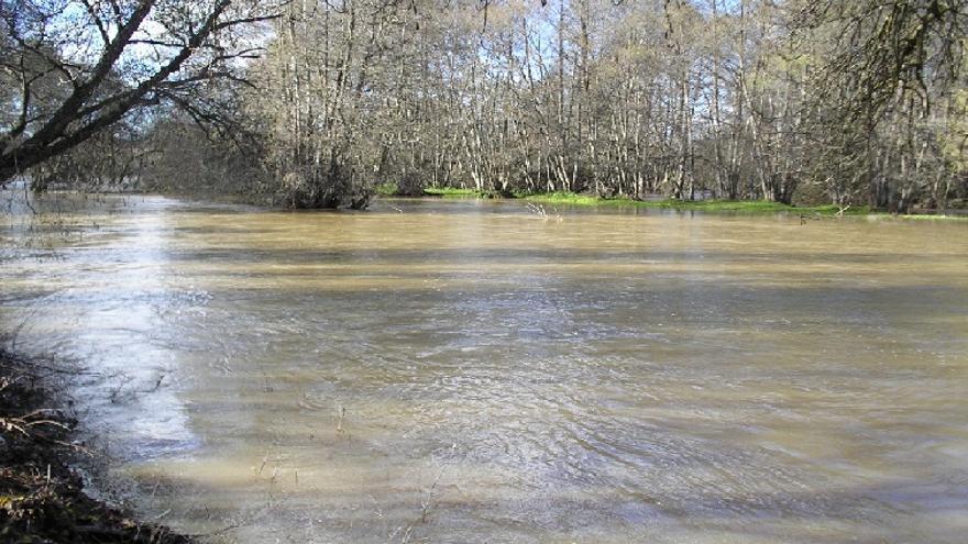 Sotos del Río Alberche / JCCM
