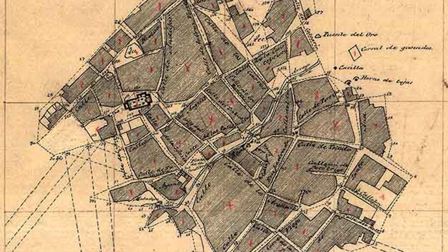 Cebolla. 1882