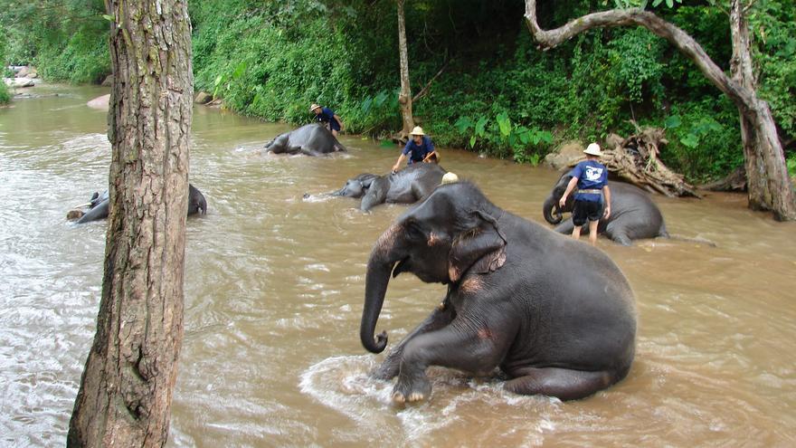 'No Ride'. En los últimos tiempos han proliferado los 'santuarios' que rescatan a elefantes maltratados y explotados. Miguel Discart