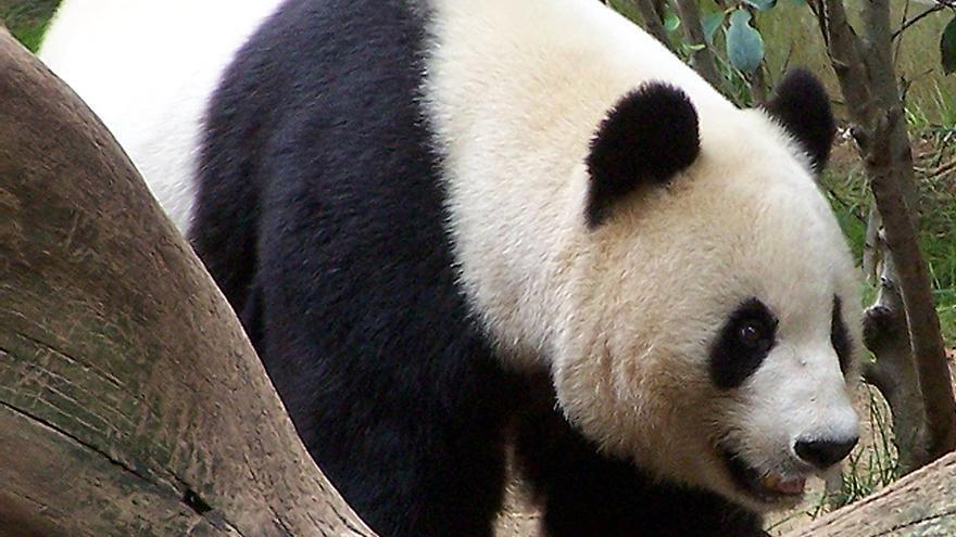 Con Panda comenzó la odisea para los que habían jugado un poco sucio (Foto: danorth1 en Flickr)