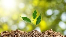 Las siete claves para el 'Objetivo Biomasa' de Castilla-La Mancha