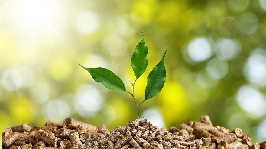 Biomasa / Fundación Renovables