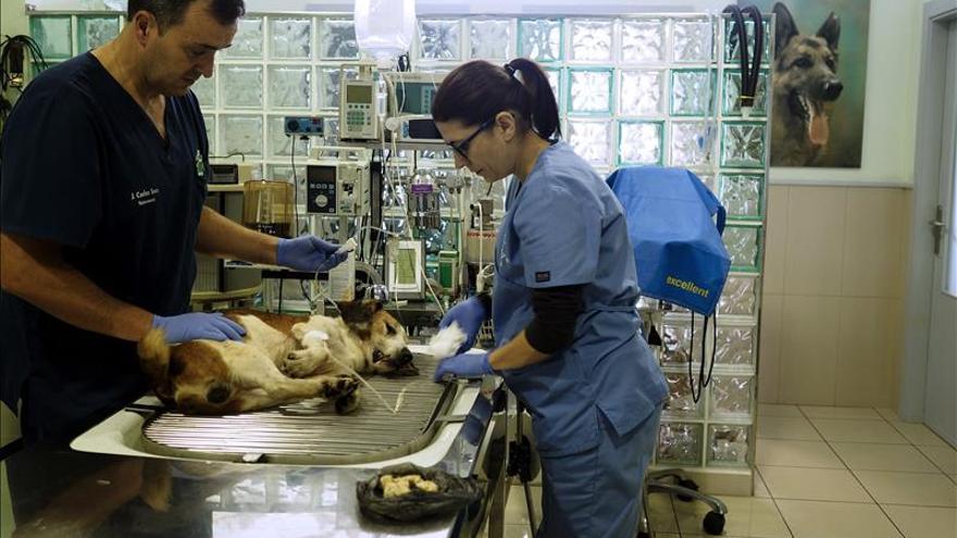 Creado un programa pionero en España para donar a la ciencia cuerpos de animales de compañía